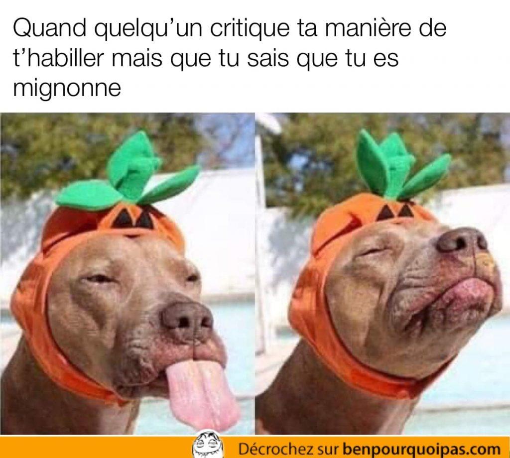 une chienne avec une citrouille d'halloween en chapeau fait une grimace