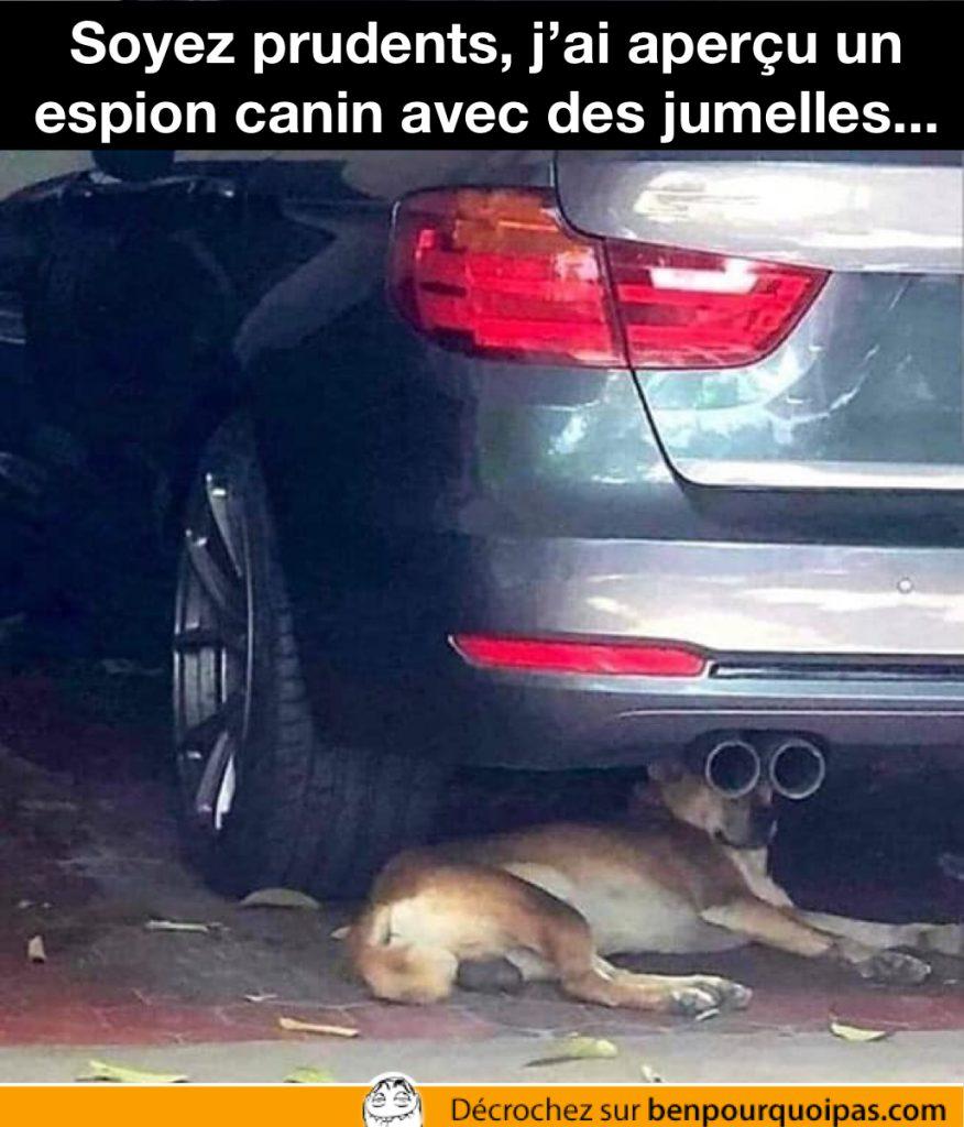 un chien couché sous une voiture