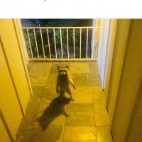 Un type louche se tiens devant ma porte
