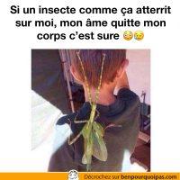 Que faites-vous si un insecte de cette taille vous arrives dessus?