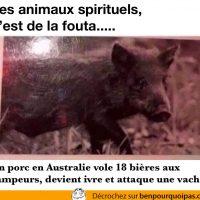 Croire qu'un animal spirituel c'est de la foutaise jusqu'à ce que tu trouves le tien