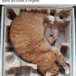 Chat à vendre, encore dans sa boîte d'origine