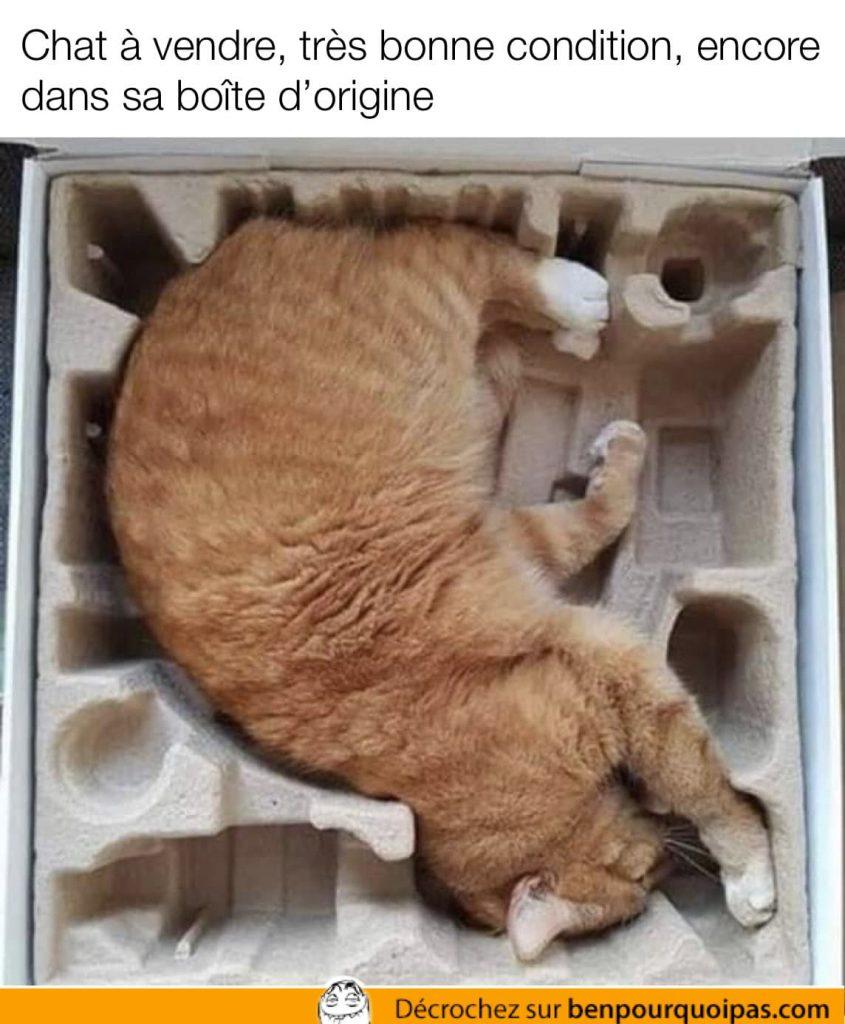 chat couché dans une boîte qui semble avoir été faite pour lui