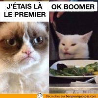 OK Boomer et Grumpy cat