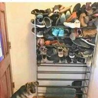 Si ton chiens mange toujours les souliers...