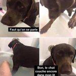 Quand tu tentes de prendre un bain tranquille et que ton chien se joint à toi