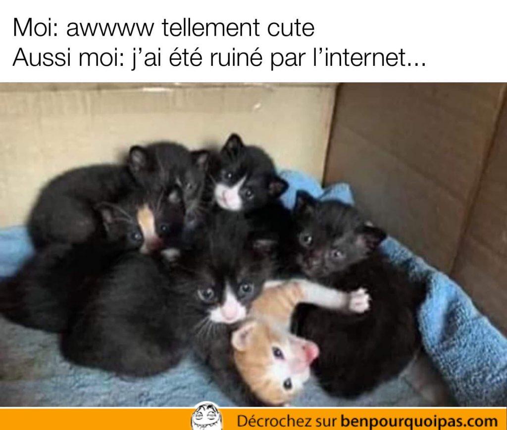 un chat entouré de chats noirs - pornstar piper perri style