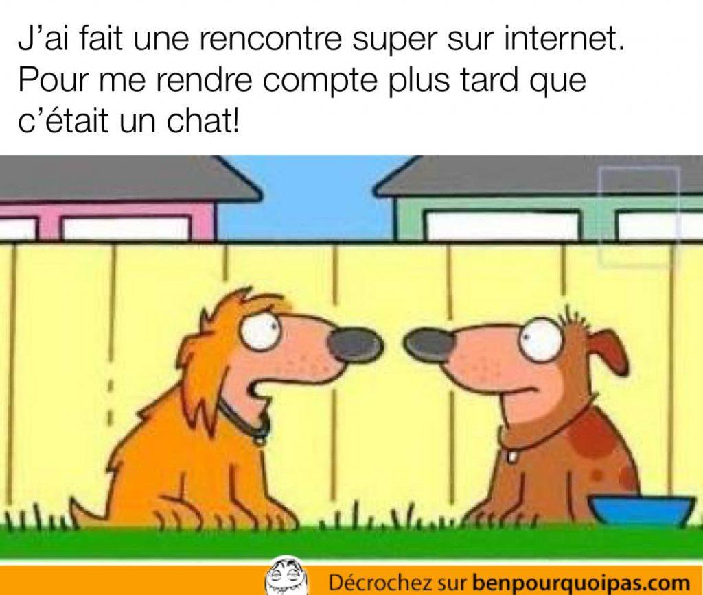 deux chiens ont une conversation