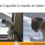 Un chat qui miaule en italien
