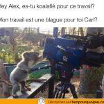 Un koala manipule une caméra…