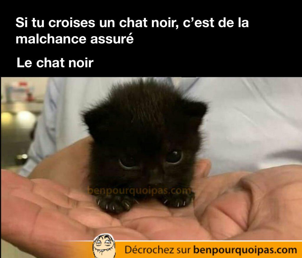 un mignon chaton tout noir