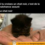 Est-ce que les chats noirs portent vraiment malheur?