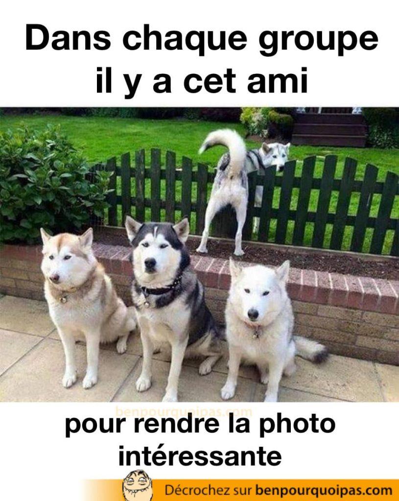 des chiens posent pour une photo tandisque l'un d'entre eux se montre le derriere