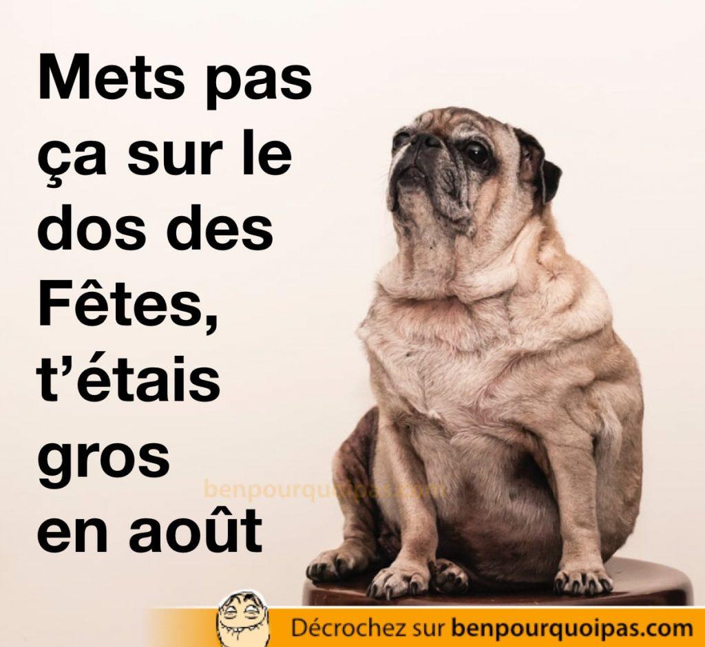 un chien obèse fait un air qui s'en fous