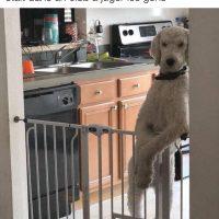 Quand t'as l'impression que ton chien te juge...