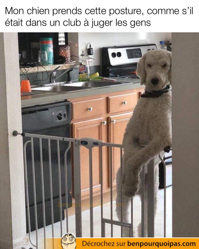 un chien sur deux pattes accoté sur le mur