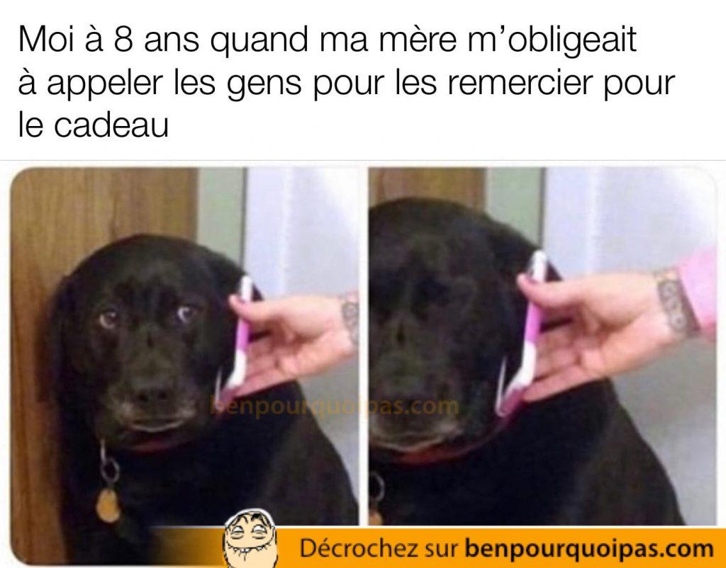 un chien au téléphone