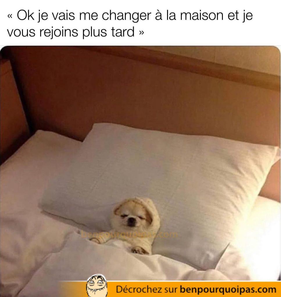un chien couché bien confortablement dans un lit