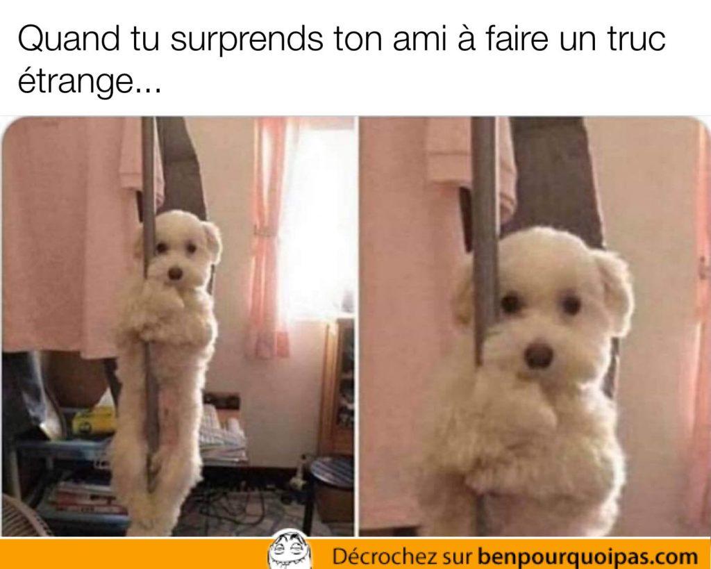 un petit chien mignon se tiens à un poteau