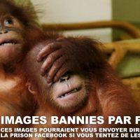 Les images bannies de Facebook - la liste des photos interdites