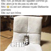 Quand ta chatte est reine dans la maison