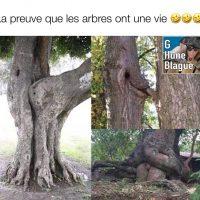 Le sex dans la nature