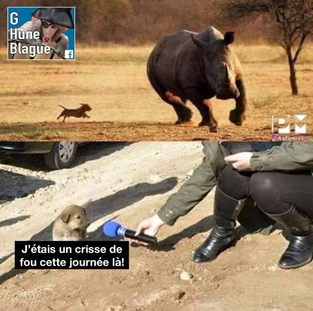 Un chien poursuit un rhinocéroce avoue en entrevue qu'il était vraiment fou cette journée là
