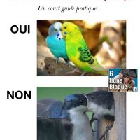 Démontrer de l'affection en publique: un court guide pratique!