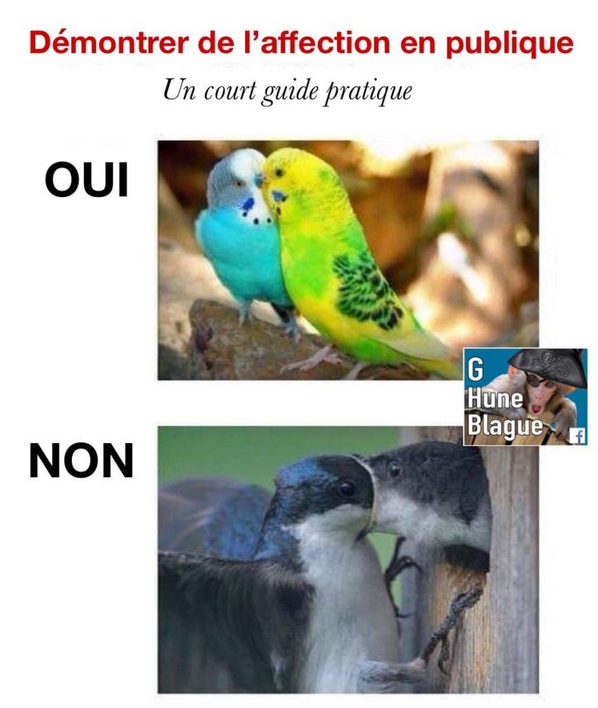 Démontrer de l'affection en publique: un court guide pratique! des oiseaux qui se bouffent la tête!