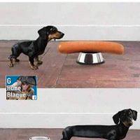 Les chiens-saucisse, comment c'est arrivé!
