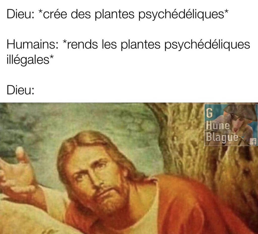 Dieu crée des plantes psychédéliques et l'homme les rends illégales... wtf!
