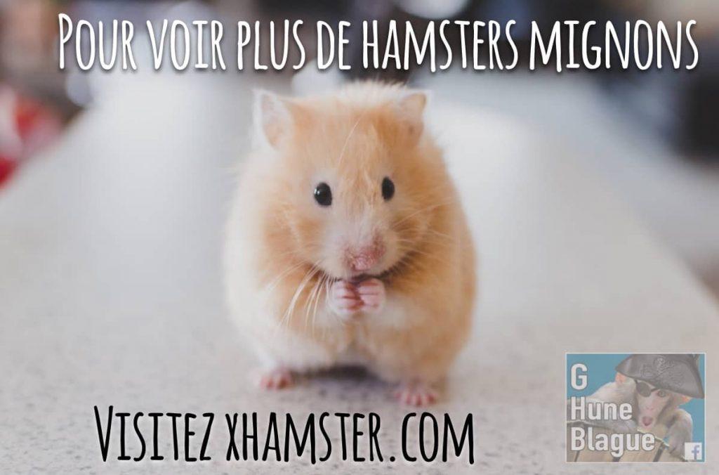Un Hamster mignon, voir le lien pour en voir plus... xhamster.com