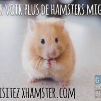 Un Hamster mignon, voir le lien pour en voir plus...