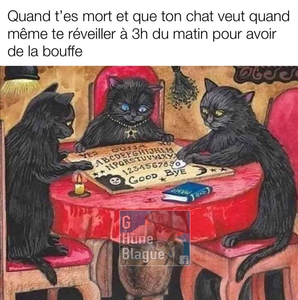 Quand t'es mort et que ton chat veut quand même te déranger à 3h du matin pour de la nourriture avec le ouija board