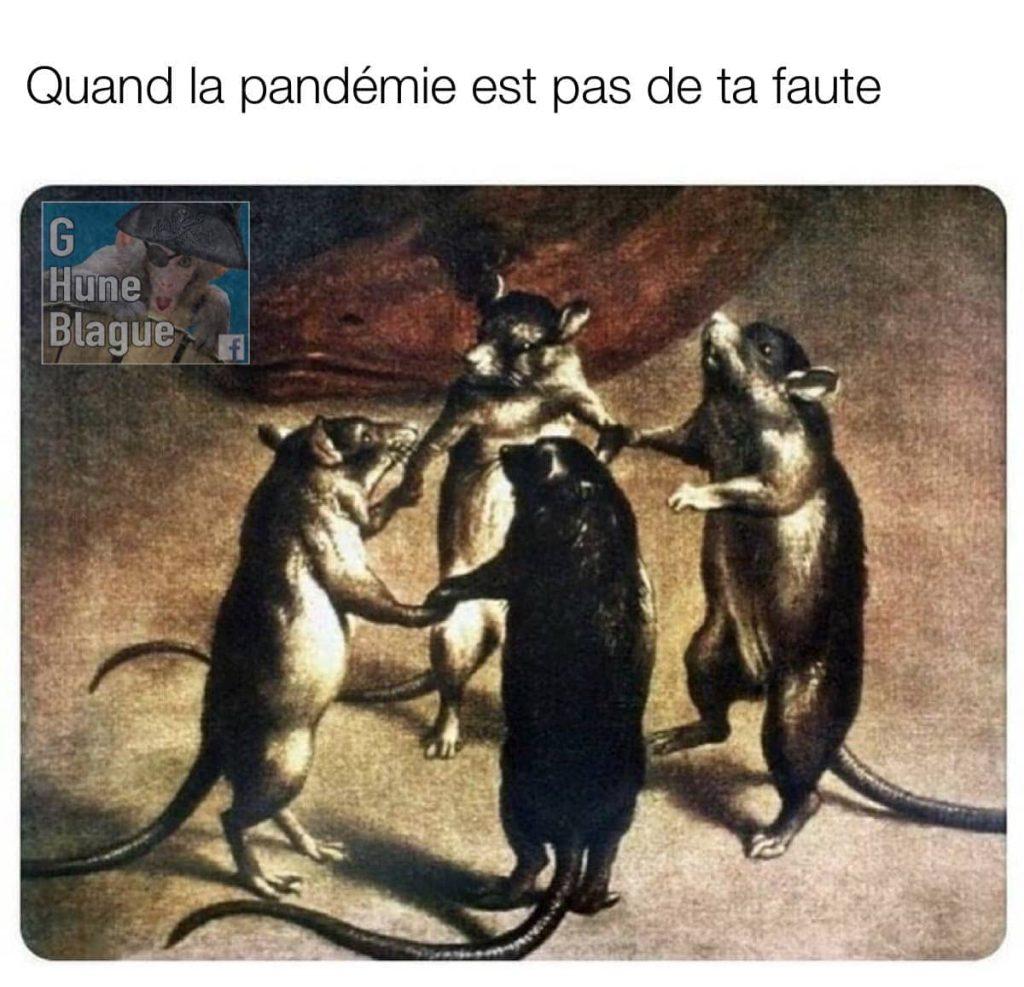 Quand t'es pas responsable de la pandémie, les rats dansent de plaisir