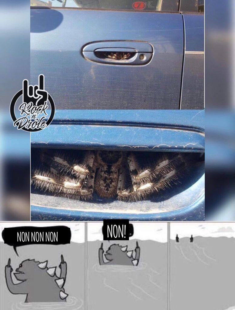 Une araignée géante se tiens dans la poignée de la voiture